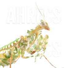 Praying mantis - Predatory